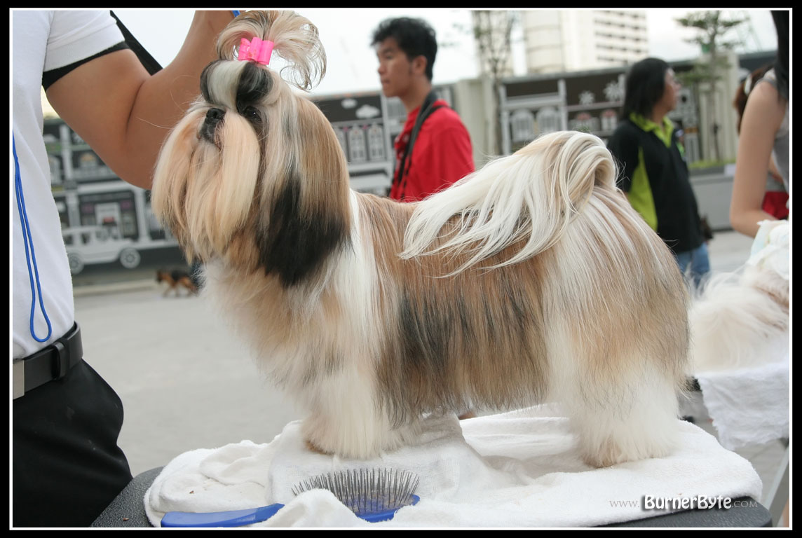 Dog Show @ Times Square